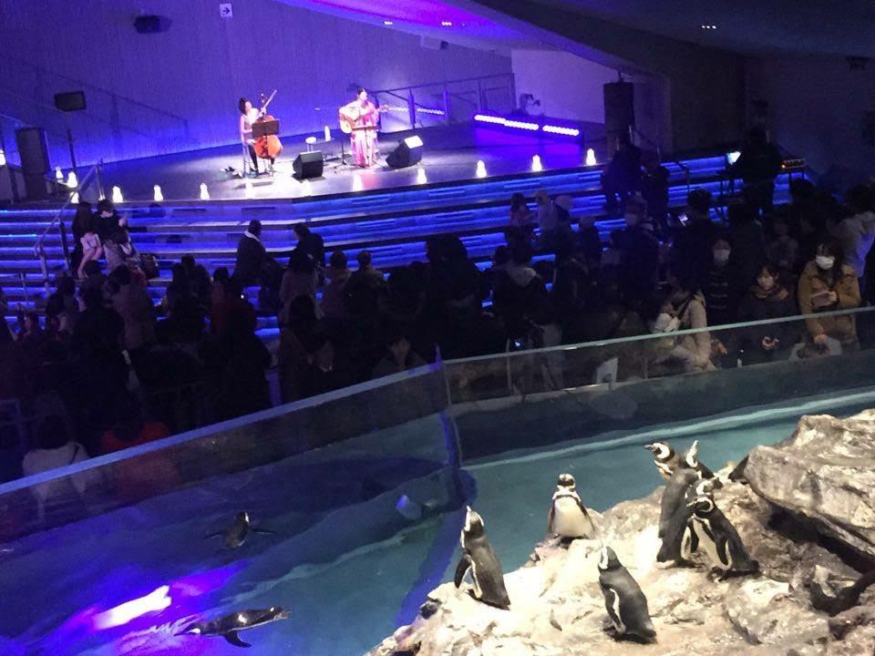2016年・すみだ水族館イベントコンサート。チェロ平山織絵さんと